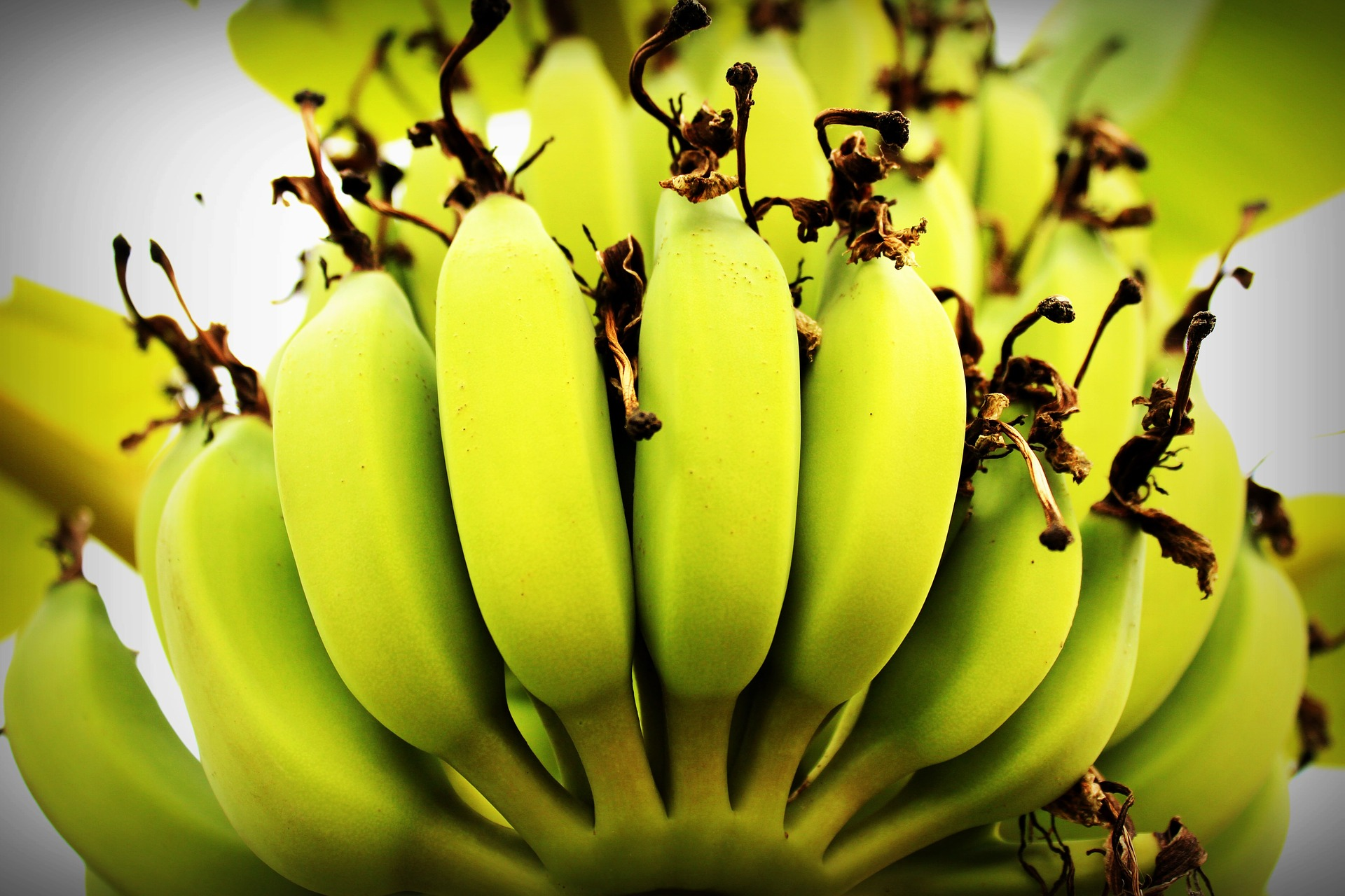 bananito dietfresh