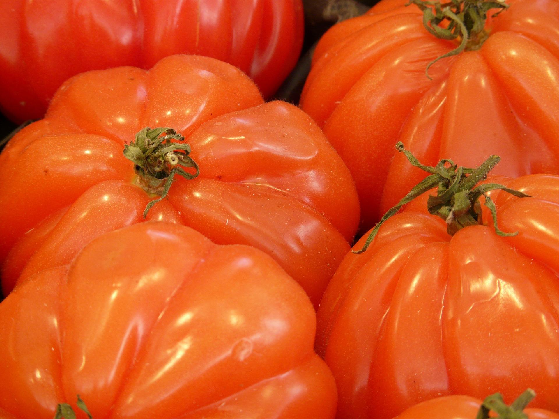 tomate de corazon de buey dietfresh