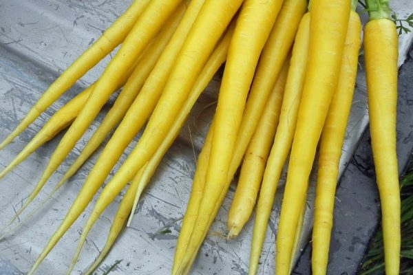 zanahoria-amarilla-dietfresh