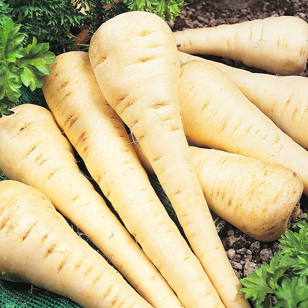 zanahoria blanca dietfresh